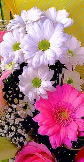 اجمل صور الورود , ورود في غاية الجمال والروعه بالصور