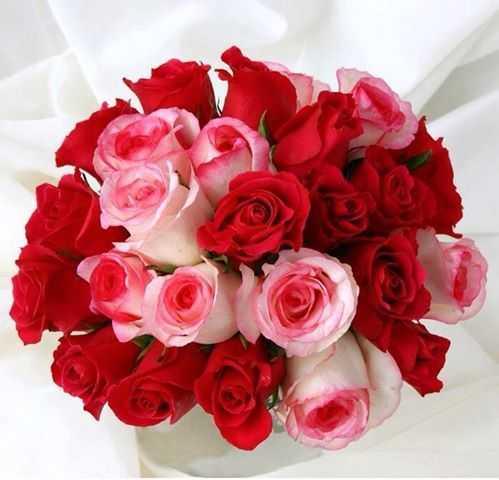 ورد جوري احمر رومانسي , احلى صور ورد احمر جوري رومانسي