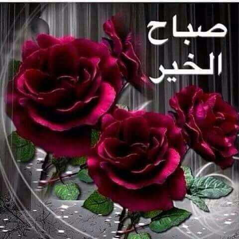 صور ورد صباح الخير ـ اجمل باقة ورد صباح الخير صباح الورد
