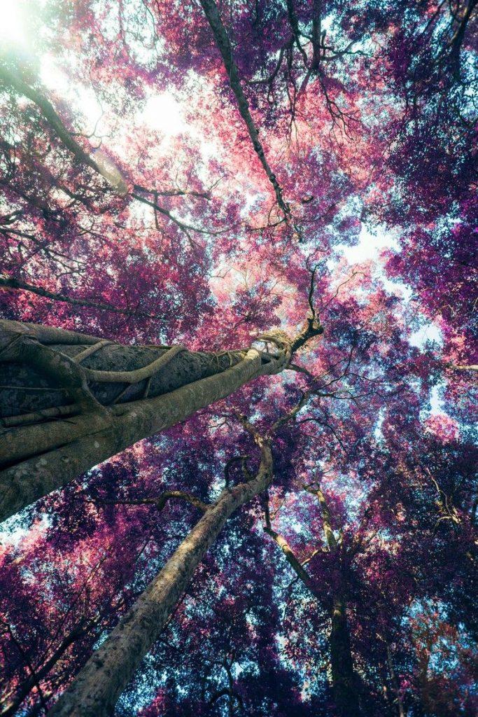 تنزيل صور خلفيات ـ تحميل صورخلفيات جميلة
