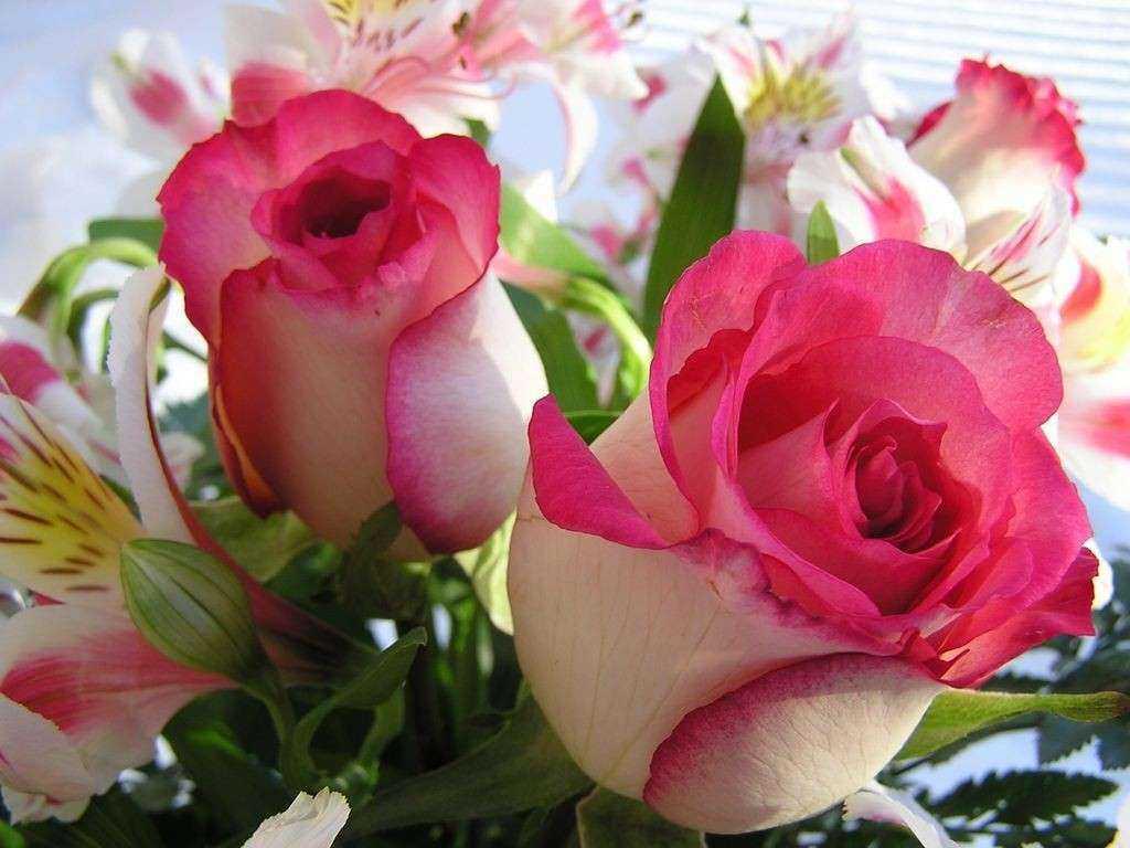 صور زهور جميلة ـ صور ازهار جميلة جدا