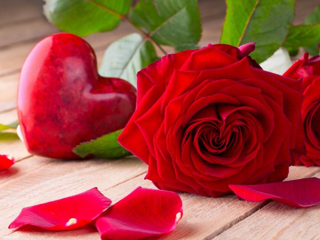 صور زهور طبيعية ـ اجمل صور وخلفيات زهور طبيعية